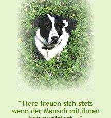 Naturheilpraxis für Tiere Eva Pütz